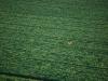 090522-montgolfiere-esclimont-7.jpg
