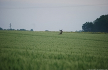 090512-montgolfiere-villiers-le-mahieu-8.jpg