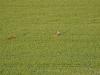 vol-montgolfiere-6-110516