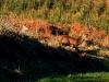 traversee001-bernard-carbonneaux